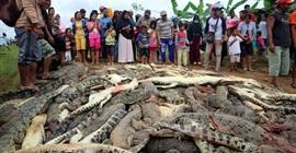 شاهد.. تمساح يقتل رجلًا فانتقمت القرية بذبح 292 تمساحًا! - المواطن