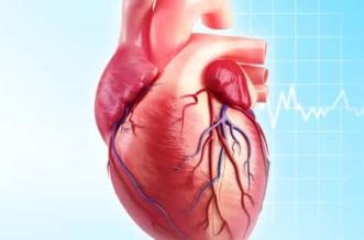 النمر: 6 عوامل تسبب انسداد شرايين القلب احذروها - المواطن