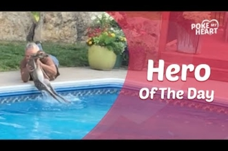 بالفيديو.. رجل يقفز داخل مسبح لإنقاذ غزال صغير من الغرق - المواطن