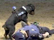 فيديو مذهل.. كلب يجري إنعاشًا قلبيًّا وتنفسًا صناعيًّا لشرطي - المواطن