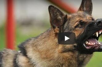 بالفيديو.. كلب بوليسي يغافل مدربه ويهاجم أحد المارة - المواطن