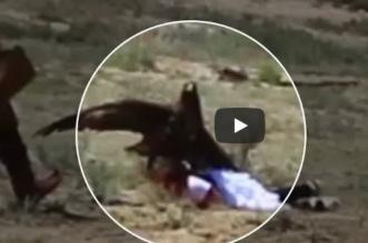 بالفيديو.. نسر عملاق يحاول خطف طفلة بمخالبه - المواطن