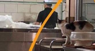 قطة تتسبب بإغلاق محل تجاري في عرعر - المواطن