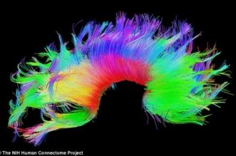 بعد الأصابع والعيون..  بصمة المخ تقود العلم للتمييز بين البشر - المواطن