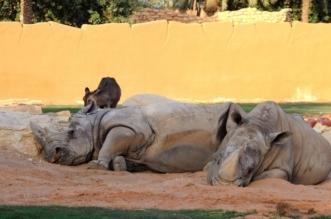 مواطنون يرثون حال حديقة حيوانات حي الملز - المواطن
