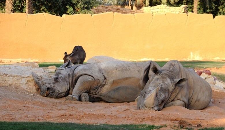 مواطنون يرثون حال حديقة حيوانات حي الملز صحيفة المواطن الإلكترونية