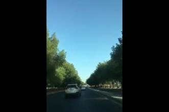 شاهد.. الأشجار تزين أحد شوارع مكة ومطالب بتعميم التجربة - المواطن