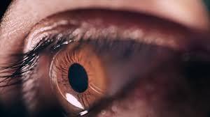 عين الإنسان.. جوهرة لا تُقدَّر بثمن هكذا نحافظ عليها - المواطن