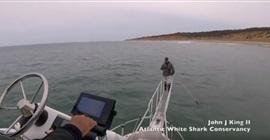 بالفيديو.. قرش أبيض يقفز من الماء ليلتهم قدم رجل - المواطن