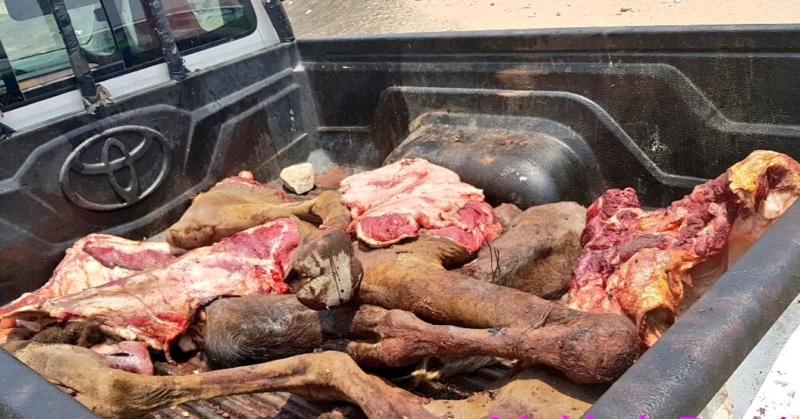 كميات كبيرة من اللحوم الفاسدة في مخططات ولي العهد 1
