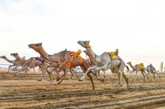 آل هميل: إقامة مهرجان ولي العهد للهجن في الطائف ستنعكس إيجابيًا على الرياضة - المواطن