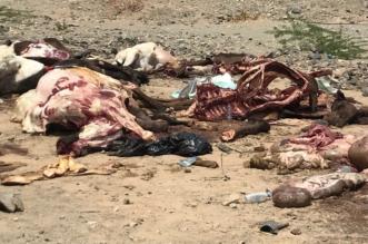 صور صادمة.. 448 ذبيحة فاسدة في مسالخ عشوائية بمكة - المواطن