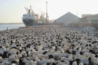 الحجر البيطري يمنع دخول 408.211 ماشية خلال 3 أسابيع - المواطن