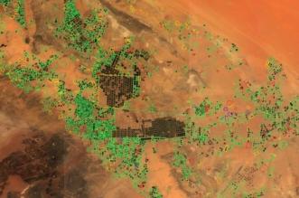 التقاط زارعي الأعلاف بالصور الفضائية و4 آلاف ريال غرامة الهكتار - المواطن