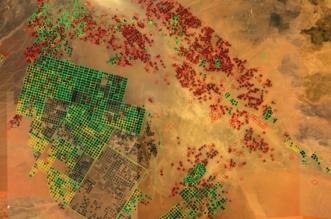 زراعة الأعلاف الخضراء في المملكة تستهلك حوالي ثلث حصة مصر من مياه النيل - المواطن