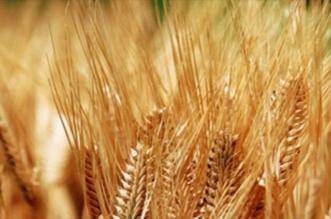 الحبوب تعلن تعديل سعر بيع كيس الشعير زنة 50 كجم - المواطن