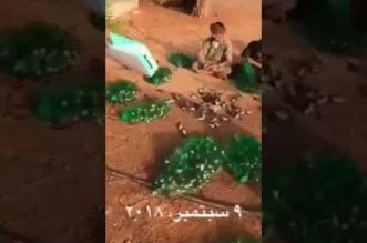 بعد صيد النيص والضبع .. مقطع صادم لذبح عشرات الطيور - المواطن