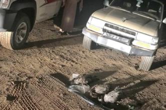 ضبط مخالفين مارسوا صيد الطيور بمناطق الحظر بمكة والشرقية - المواطن