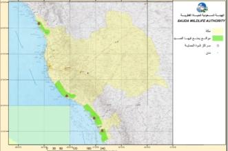 20 ألف ريال غرامة صيد الطيور على سواحل البحر الأحمر مع بداية العام الجديد 1440 - المواطن