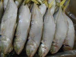 أيام تفصلنا عن بدء صيد أسماك الباغة في البحر الأحمر - المواطن