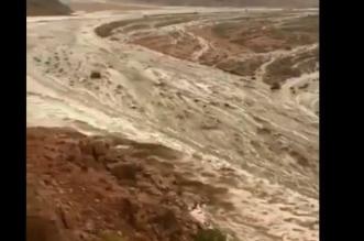 فيديو.. وادي تبوك الأبيض يسيل بعد 24 عامًا من الانقطاع - المواطن