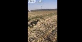 فيديو.. كلب يسقط رجلا أرضاً ويضعه في موقف محرج - المواطن