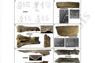 دلائل لهجرات بشرية من إفريقيا إلى الجزيرة العربية قبل 800 ألف سنة - المواطن