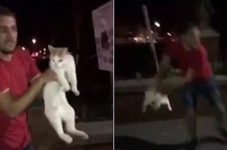فيديو صادم.. شاب يلقي قطة في الهواء كالكرة - المواطن
