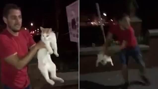 فيديو صادم.. شاب يلقي قطة في الهواء كالكرة