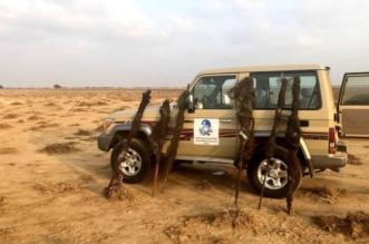 نصبوا شباكًا لصيد الطيور في مكة فأطاحت بهم الجهات الأمنية - المواطن