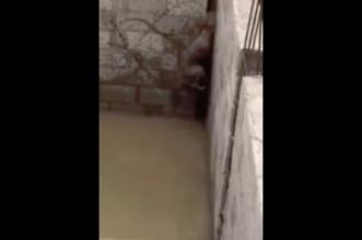 فيديو.. مواطن يحرر ذئبًا نادرًا مُحتجزًا في خزان مياه بالدوادمي - المواطن