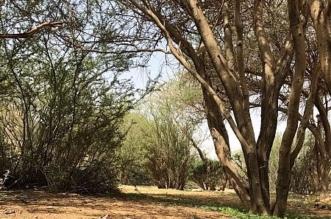 تعرف على محمية شعيب الخضارية بحوطة بني تميم - المواطن