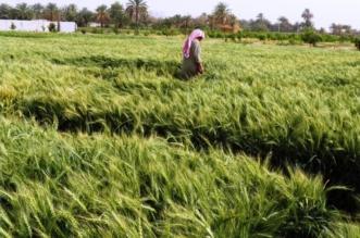 مزارع تبوك زراعة تبوك