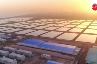 على أراضٍ سعودية.. المملكة والصين شركاء في أكبر استثمار بالاستزراع السمكي بالعالم - المواطن