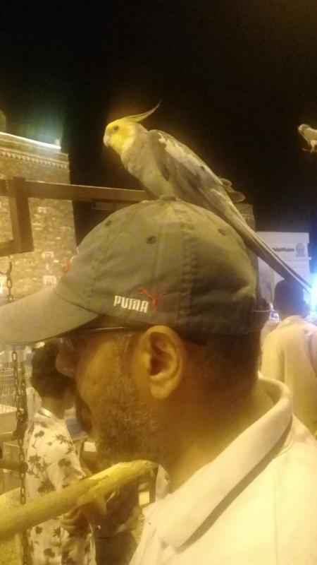 فيديو وصور.. مهرجان الببغاوات والطيور يجذب زوار القرية التراثية بجازان - المواطن