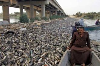 كله مات.. نفوق آلاف الأطنان من أسماك العراق بسبب تركيا وإيران! - المواطن