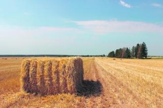 البيئة تتوعد مزارعي الأعلاف بدون رخصة.. 4 آلاف ريال غرامة لكل هكتارِ - المواطن