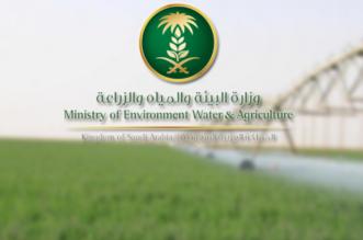 استثناء أكثر من 12 ألف مزرعة من قرار إیقاف زراعة الأعلاف الخضراء - المواطن