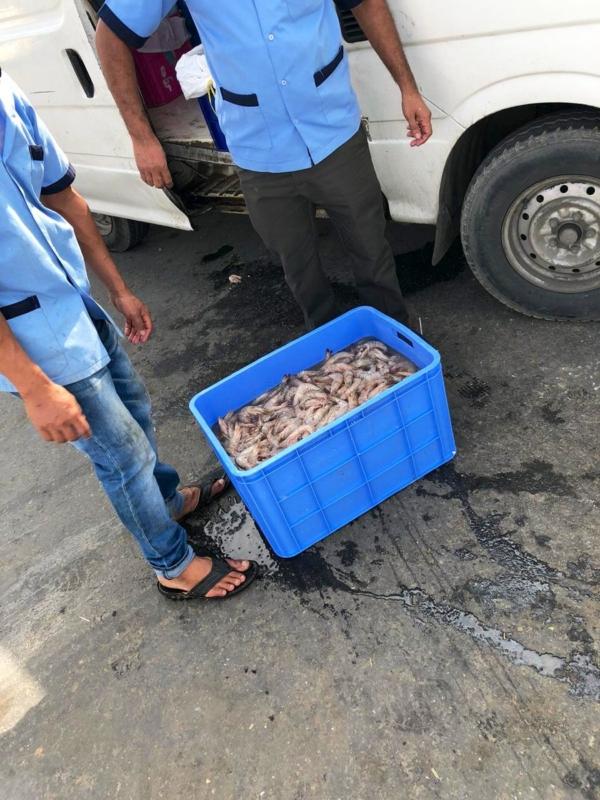 صور.. ضبط طن أسماك وجمبري فاسد في مكة - المواطن