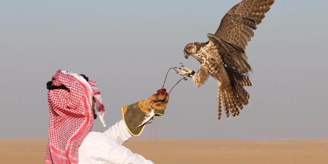 معرض الصقور والصيد السعودي .. واحات تحاكي الطبيعة من الطائف إلى الربع الخالي