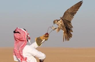 صور.. 15 محاضرة وورشة عمل بمعرض الصقور والصيد السعودي - المواطن