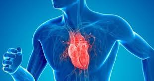 7 أسباب لضعف عضلة القلب.. الأخيرة شديدة الخطورة - المواطن