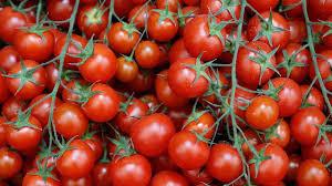 توضيح من البيئة بخصوص علاقة المبيدات بتغير لون الطماطم