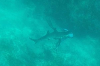 فيديو .. سمكة قرش طولها متران تقضم رأس صياد - المواطن