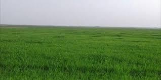#البيئة تبدأ بزراعة 300 هكتار كحقول إرشادية للزراعة المطرية في المملكة - المواطن