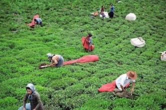يصدرون التربة.. الملالي يتاجر في أراضي إيران لمواجهة العقوبات - المواطن