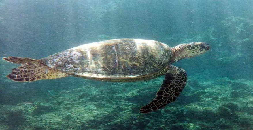 تحذير من البيئة بشأن صيد السلاحف.. عقوبات بحق المخالفين