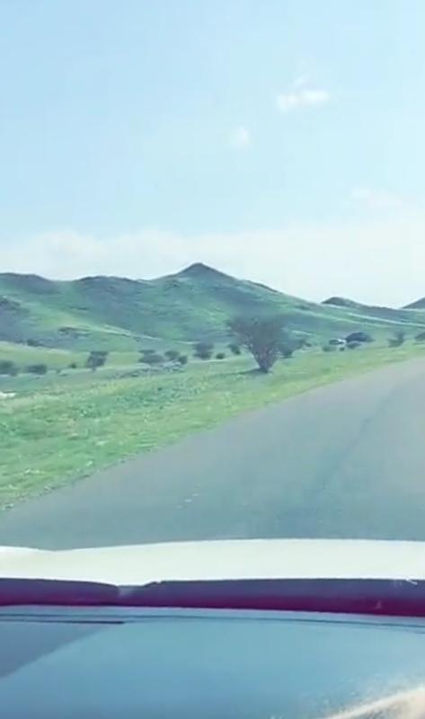 """فيديو وصور..""""المواطن"""" ترصد ربيع أم البرك تكتسي الأخضر - المواطن"""