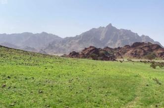 صور.. جبال وسهول المدينة تزدان بحلة خضراء بعد هطول الأمطار - المواطن