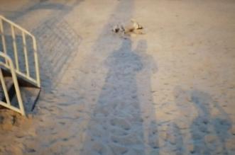 جثة كلب متحللة بمنتزه في الحرث تكشف غياب الصيانة والنظافة - المواطن